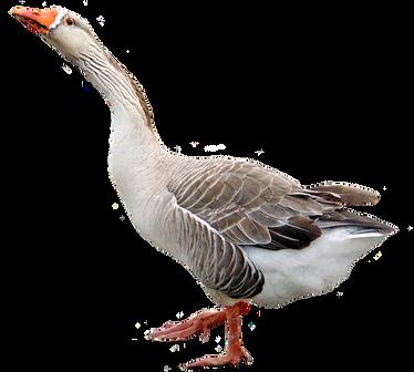 Goose PNGs