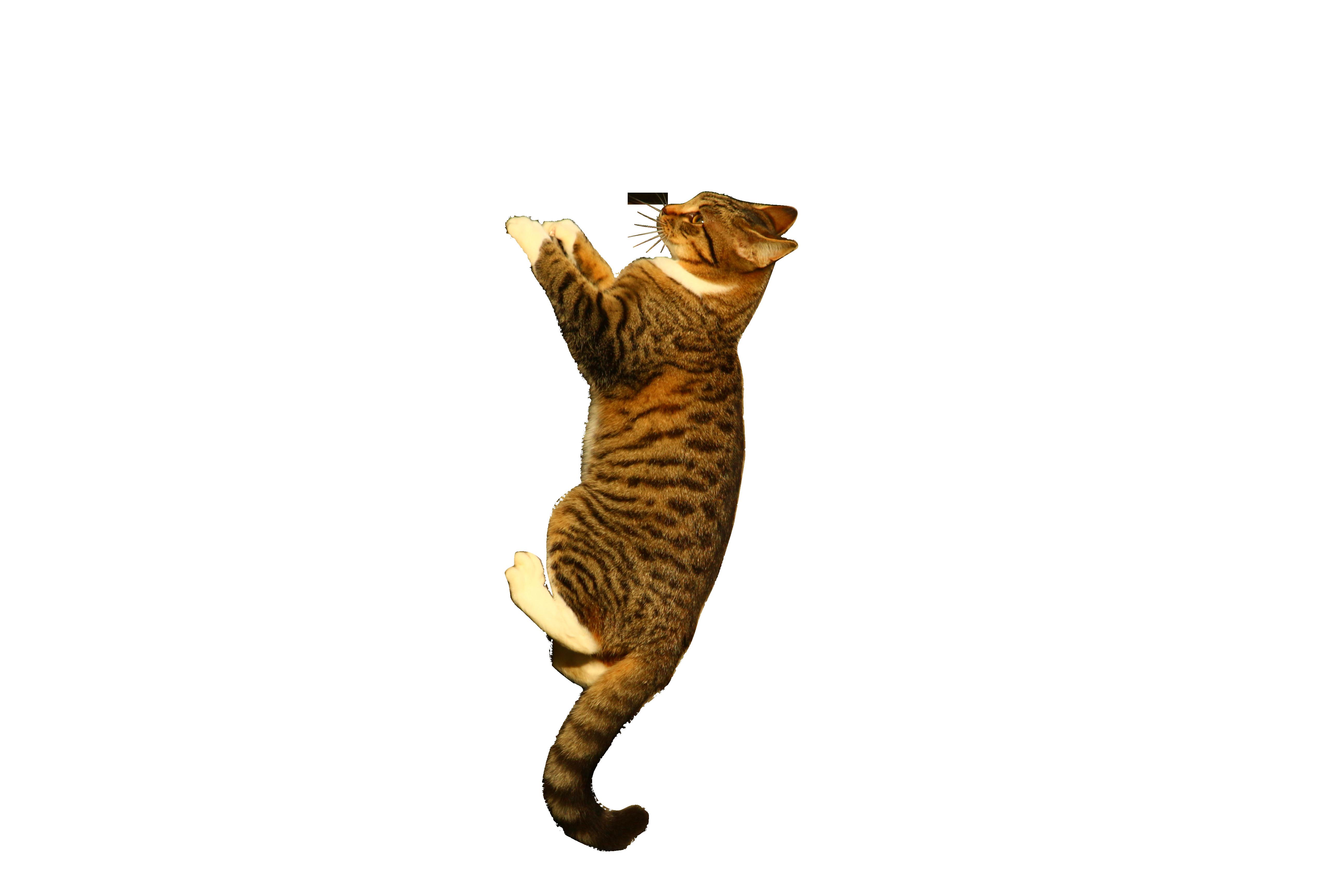 cat-1079581_Clip