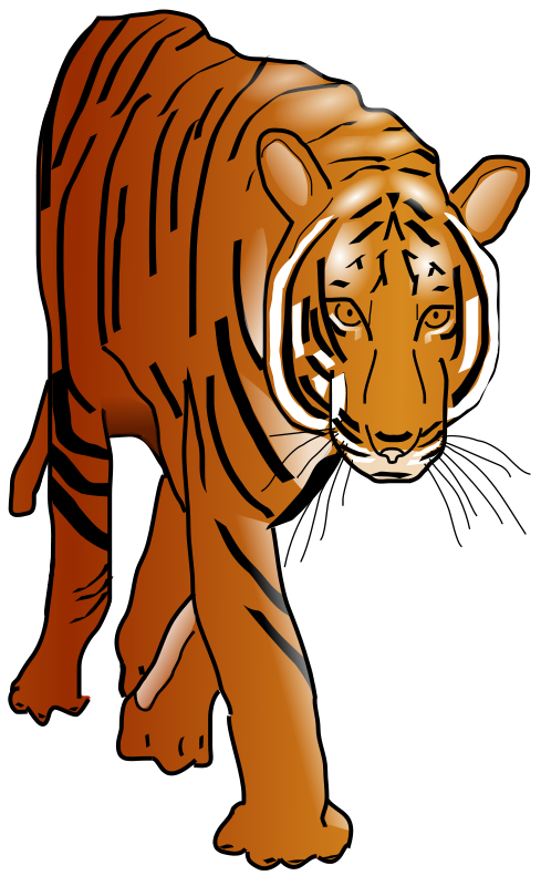 Anonymous_tiger