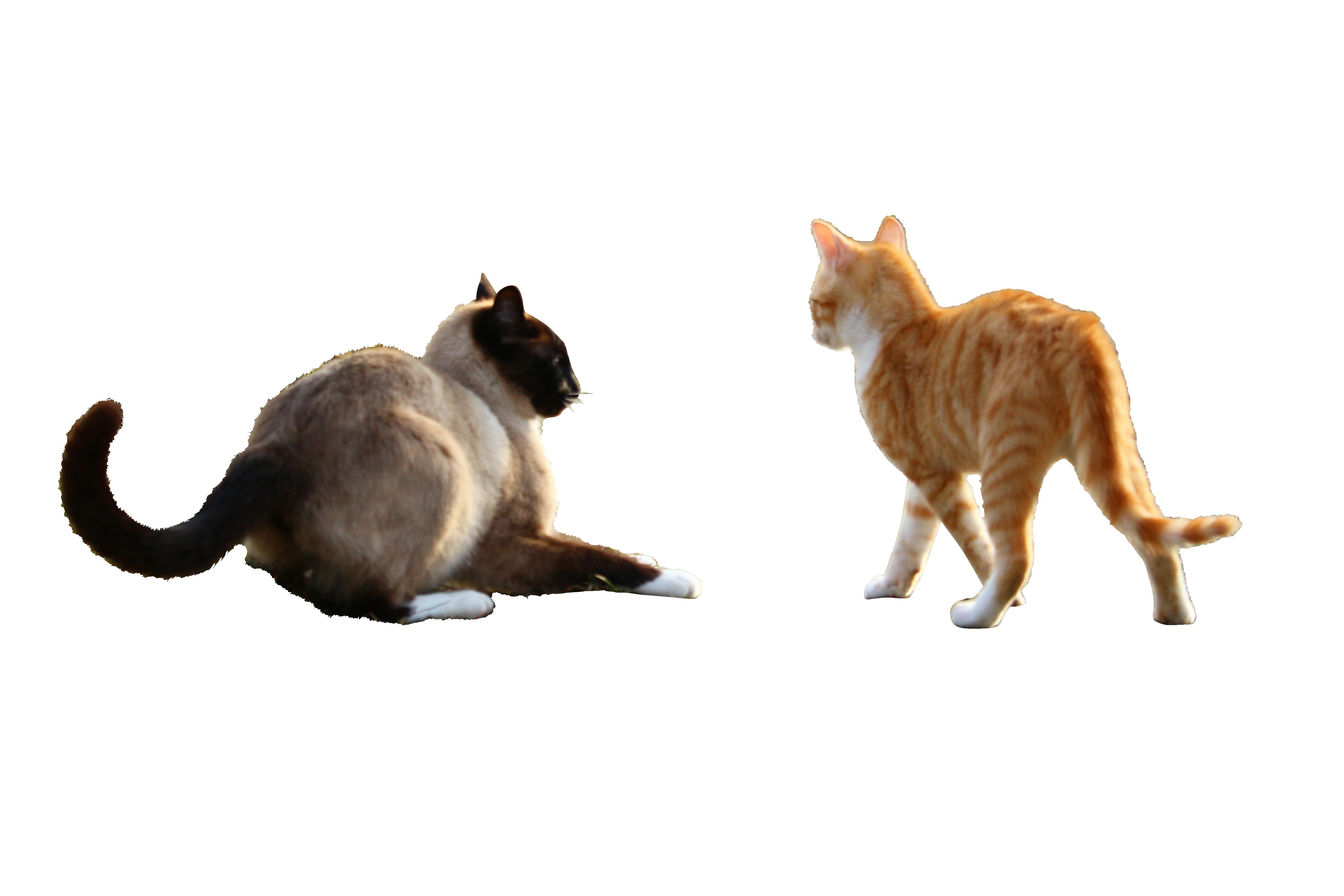 cat-1184931_Clip