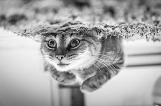 Cossyimages Kitten (71).jpeg