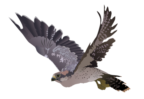 Falcon PNG images