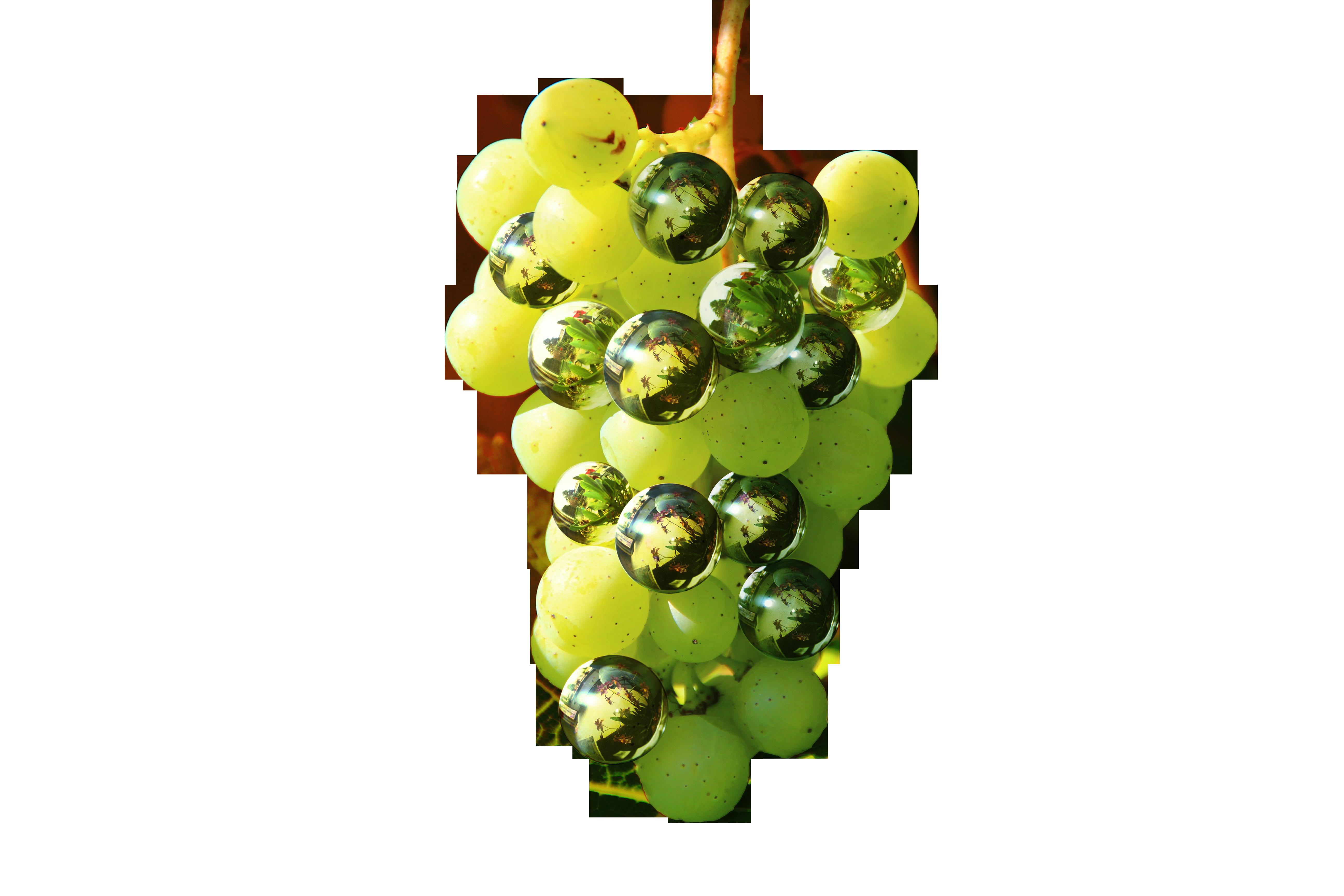 grapes-1100083_Clip