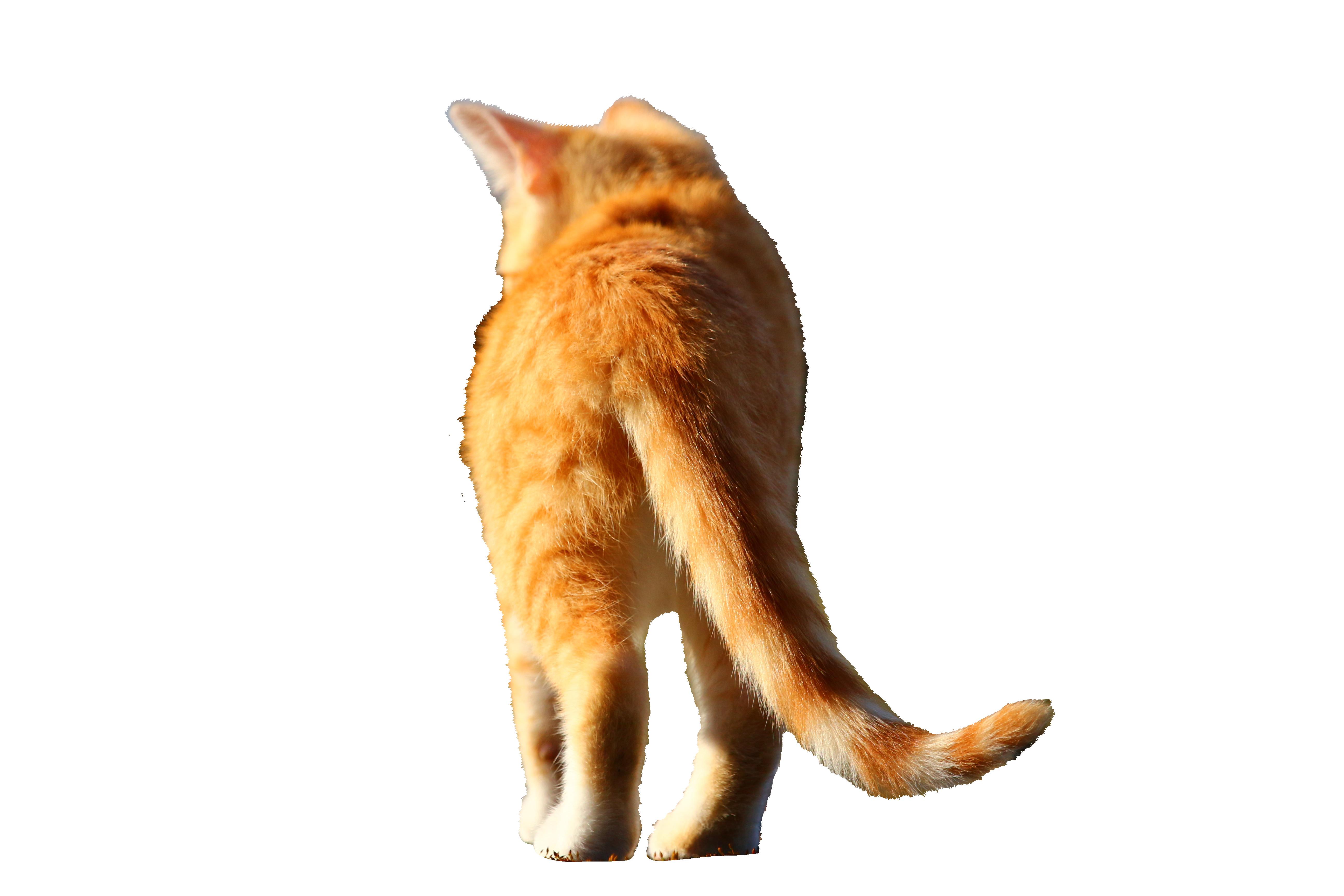 cat-1183139_Clip
