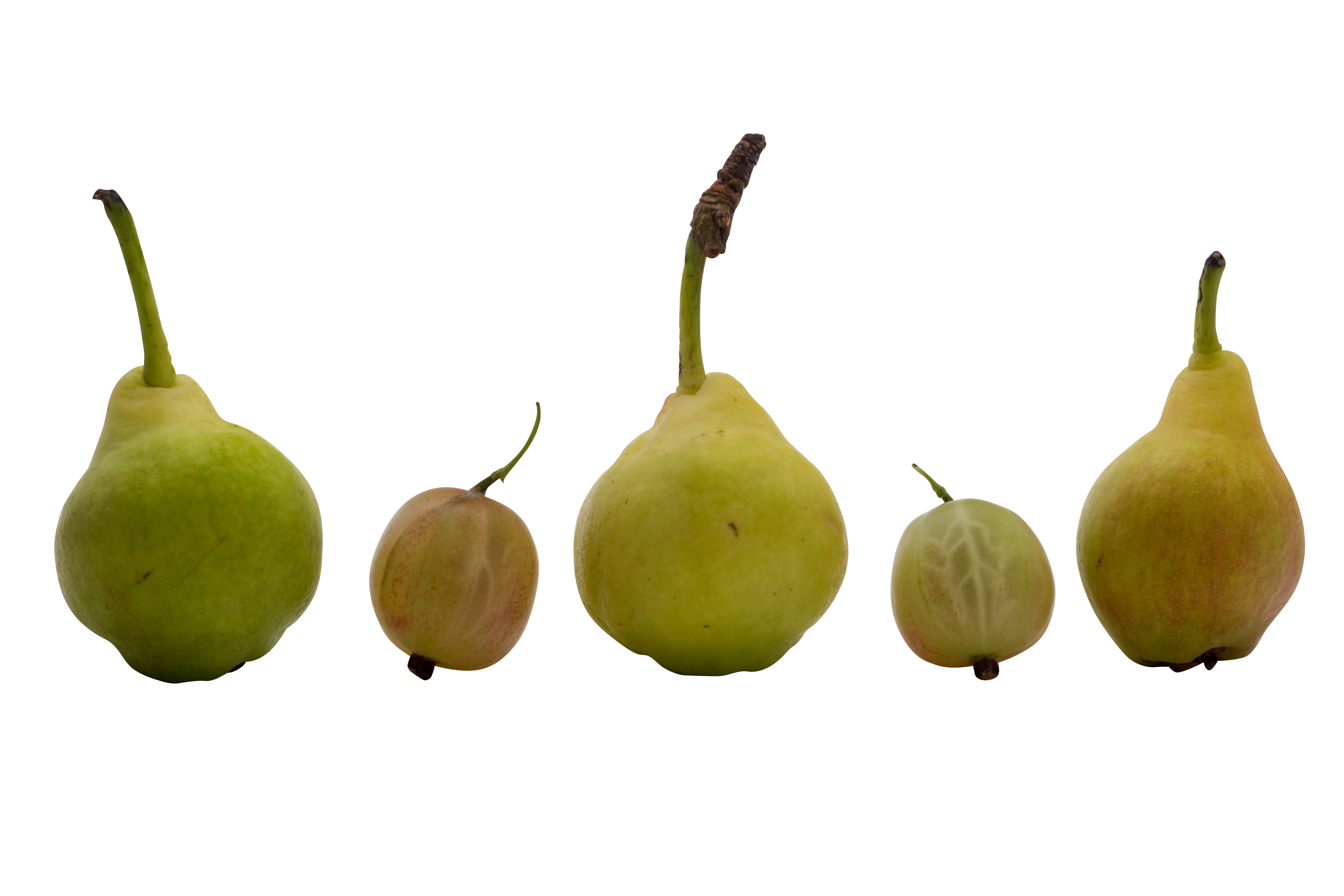 fruit-840032_Clip