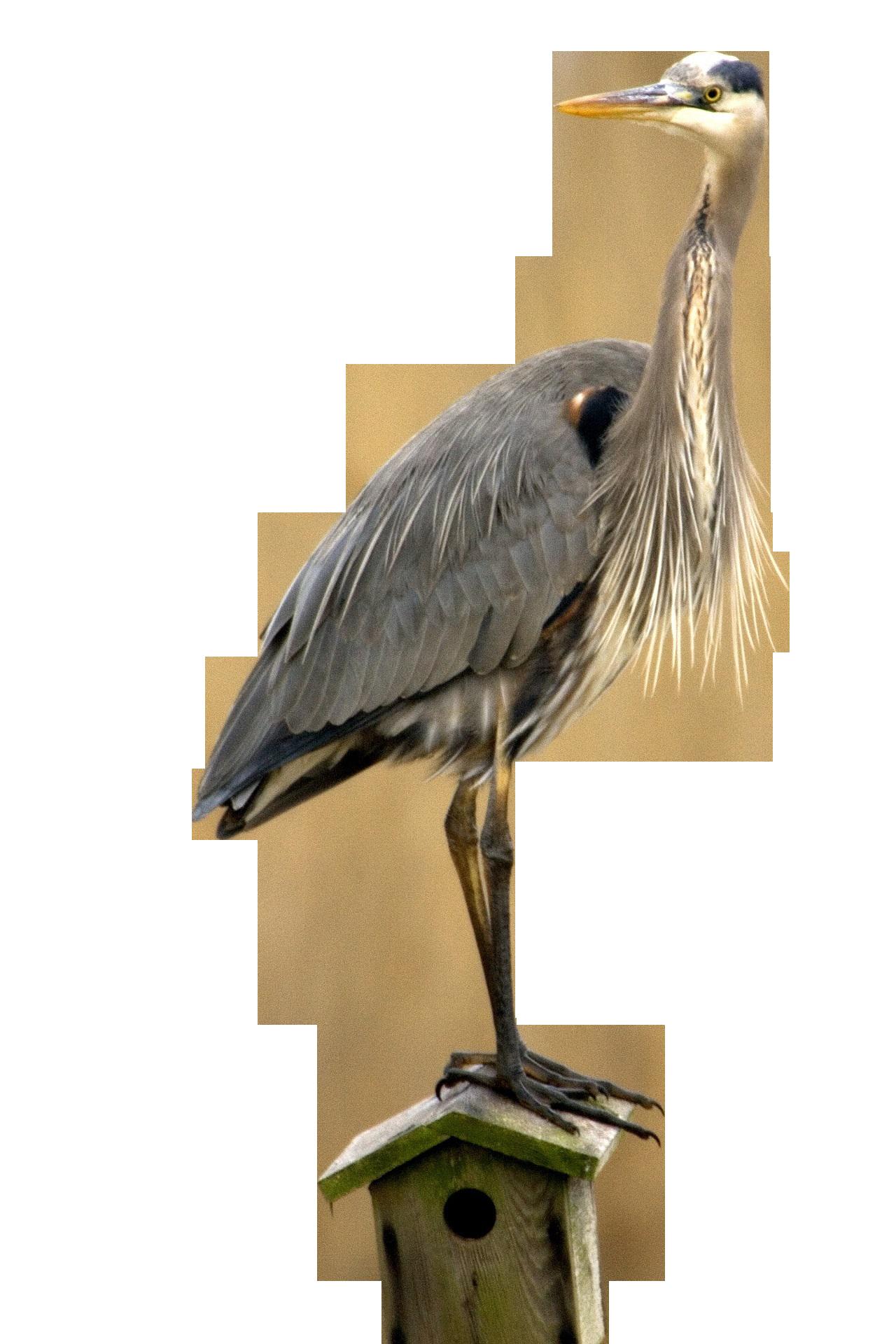 bird-857157_Clip