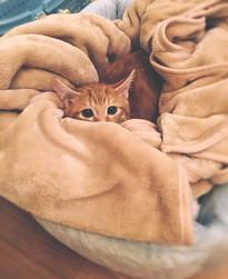 Cossyimages Kitten (58).jpeg