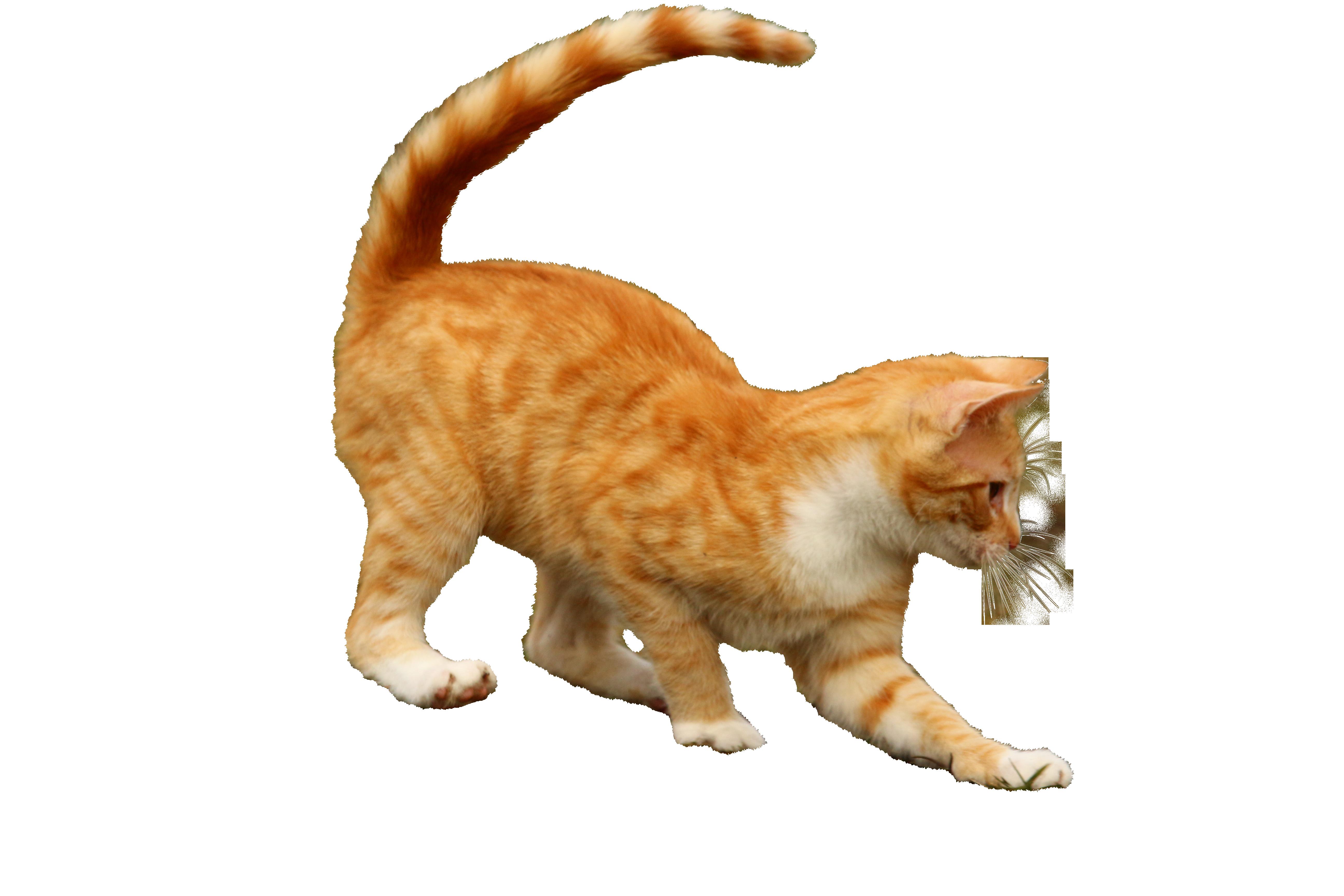 cat-1234998_Clip