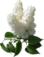 flowers-2194145__340.png