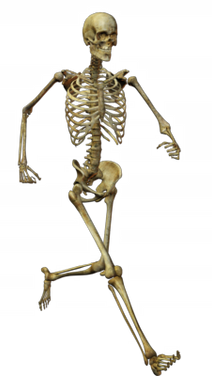 Here on FreePNGs you can download unlimited, free PNGs. All our free PNG images are sourced from public domain sites so have no royalties. Check out the complete skeleton transparent PNGs.