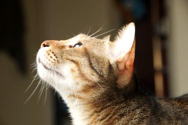 Cossyimages Kitten (61).jpeg