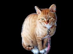 cat-360807_Clip