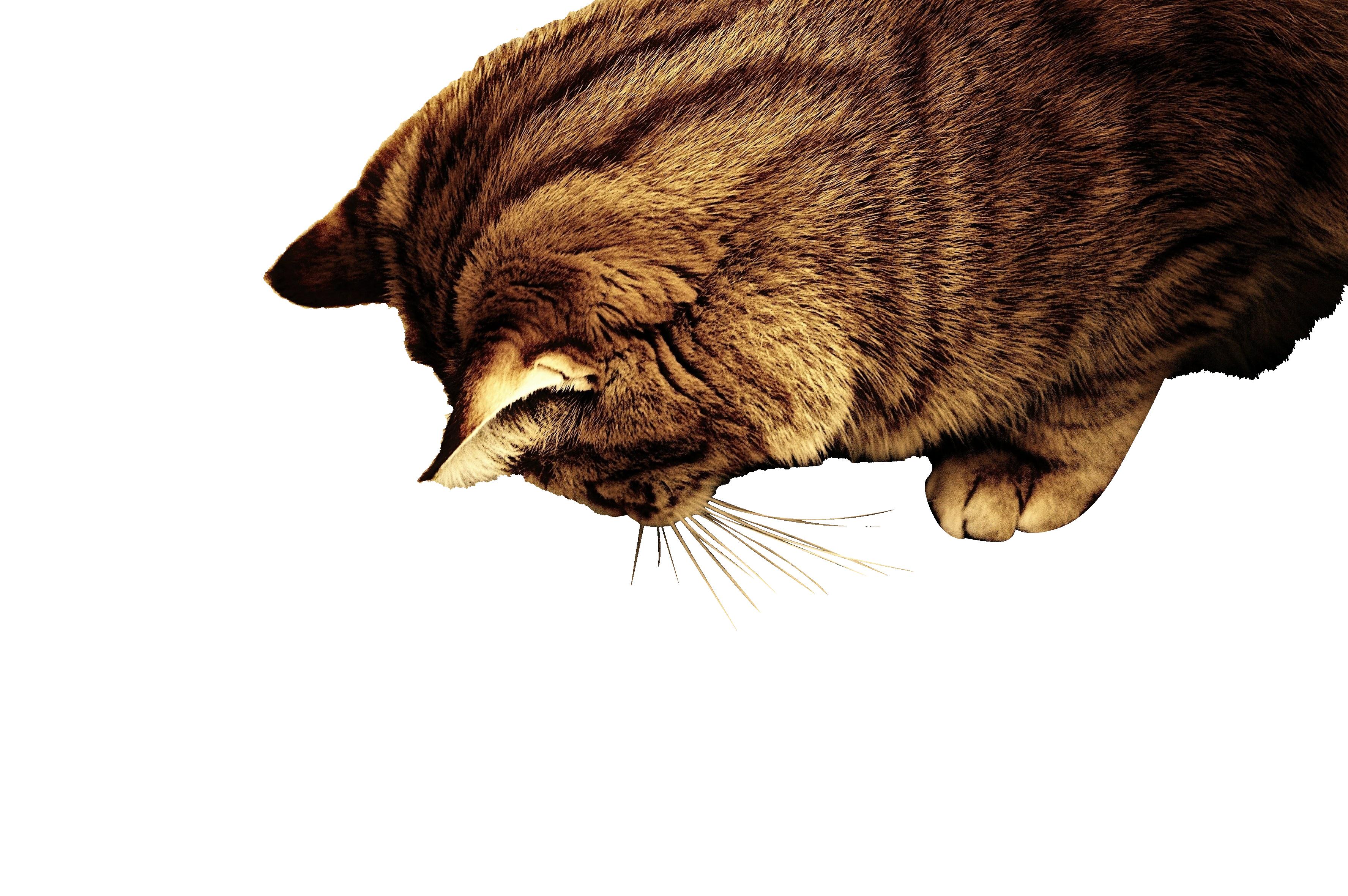 cat-1055630_Clip
