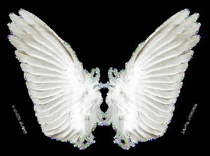 Wings-png-27