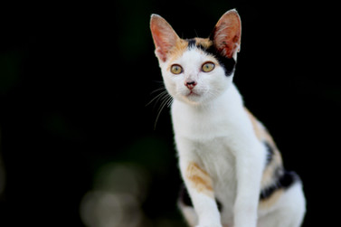 Cossyimages Kitten (50).jpeg