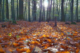 Cossyimages Autumn (33).jpg