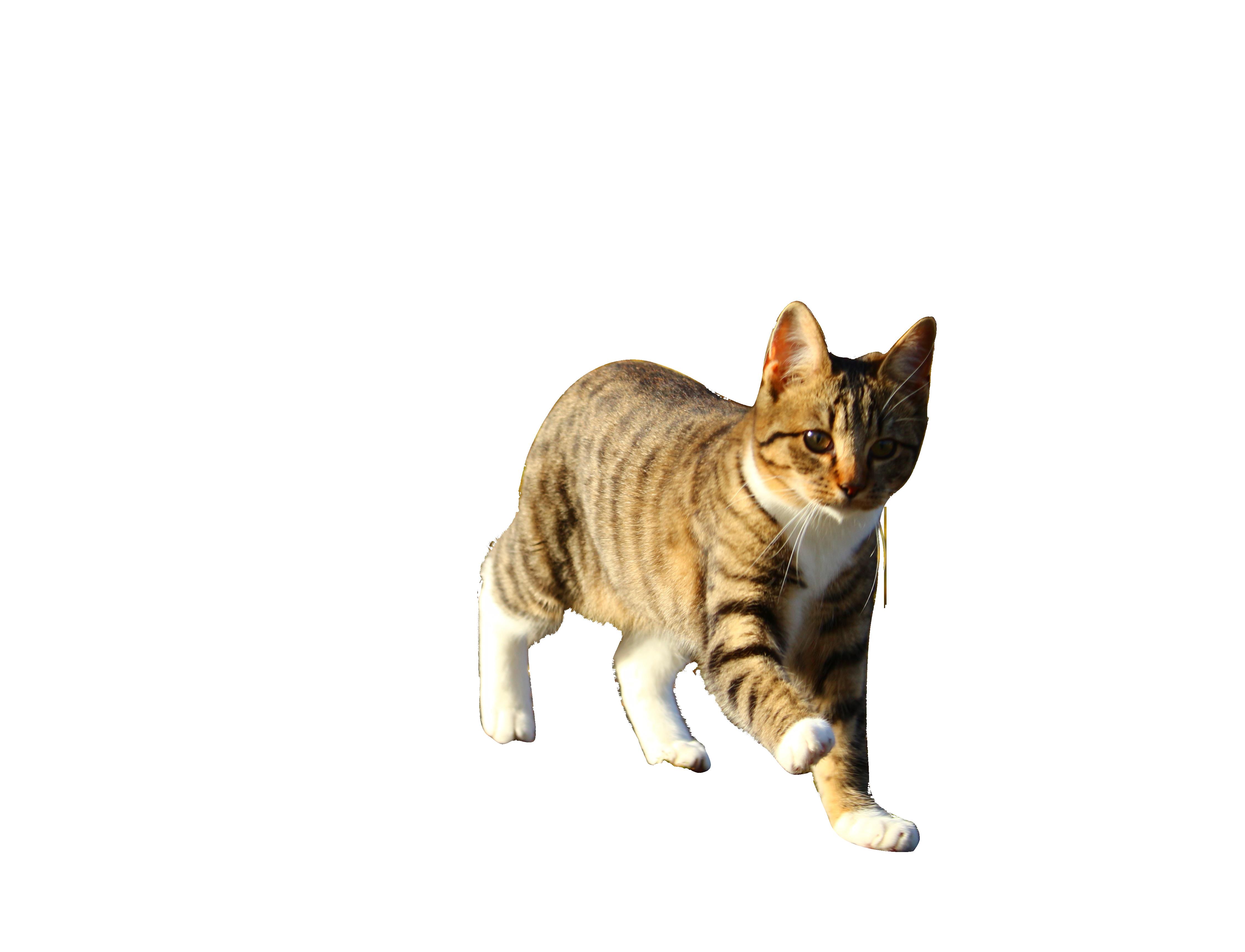 cat-1033597_Clip