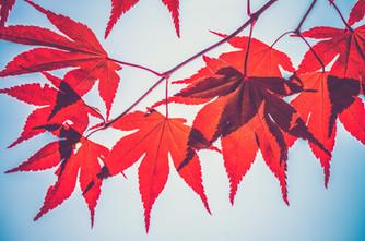 Cossyimages Autumn (13).jpg