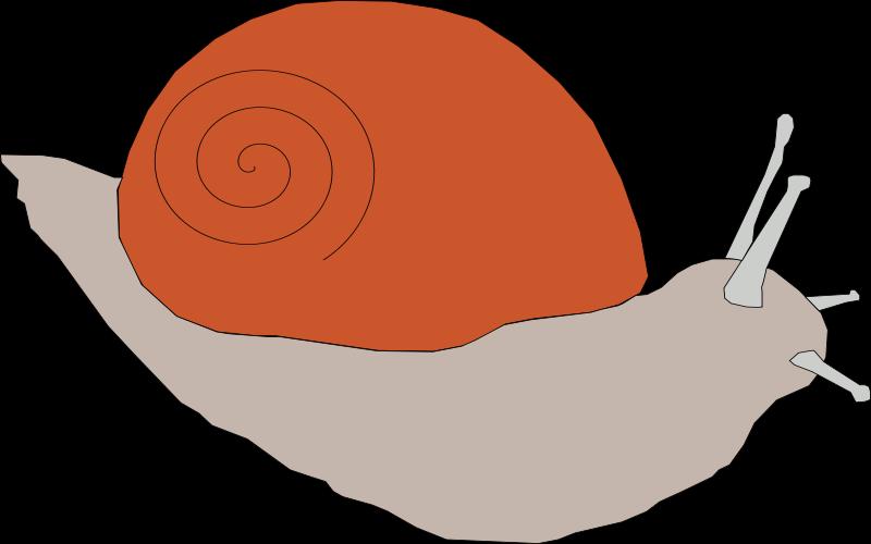 Machovka_snail1
