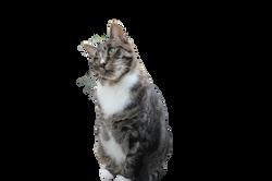 cat-941089_Clip