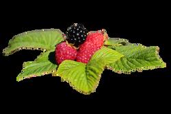 raspberries-688129_Clip
