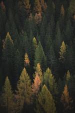 Cossyimages Autumn (21).jpg