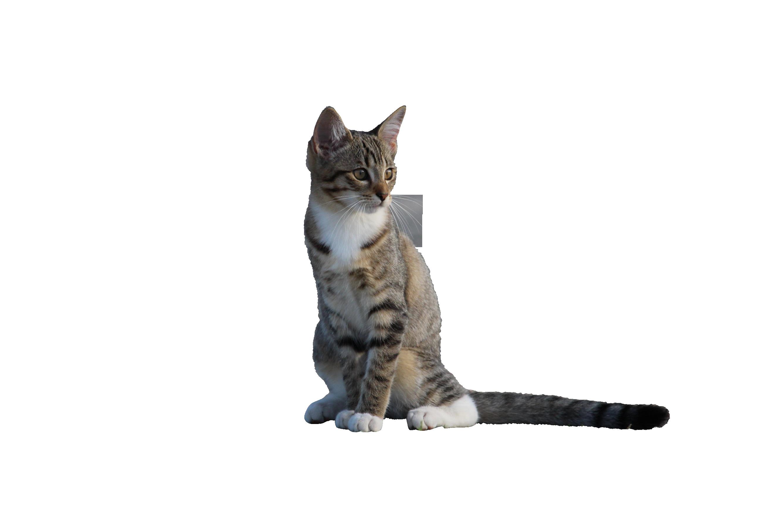 cat-911125_Clip