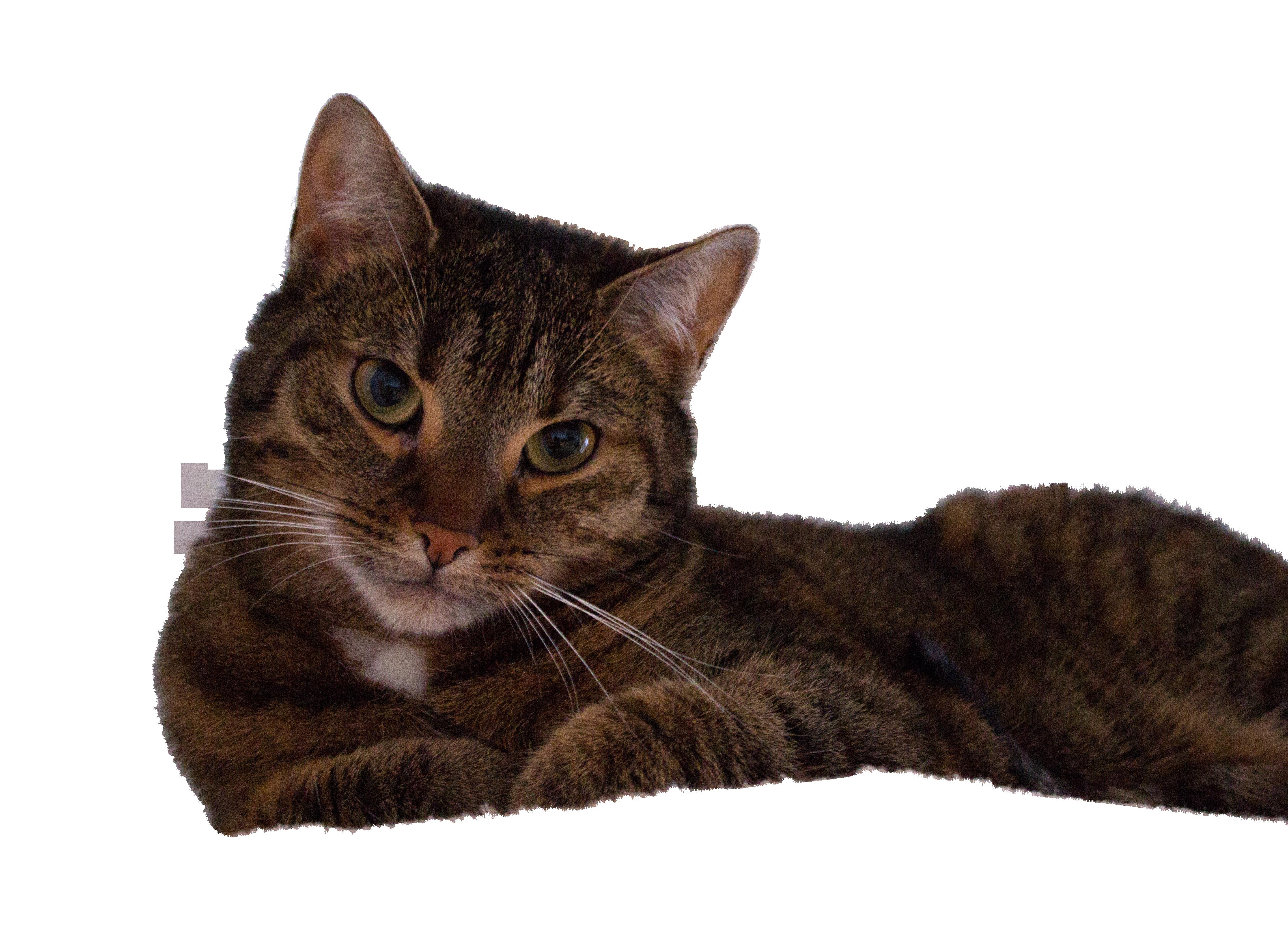 cat-943130_Clip