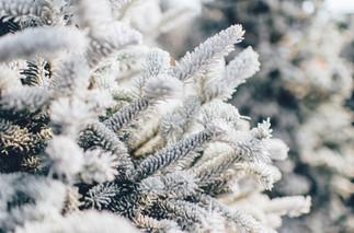 Cossyimages Winter (18).jpg