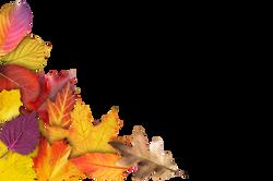 autumn-941304_Clip