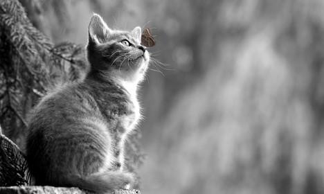 Cossyimages Kitten (7).jpg