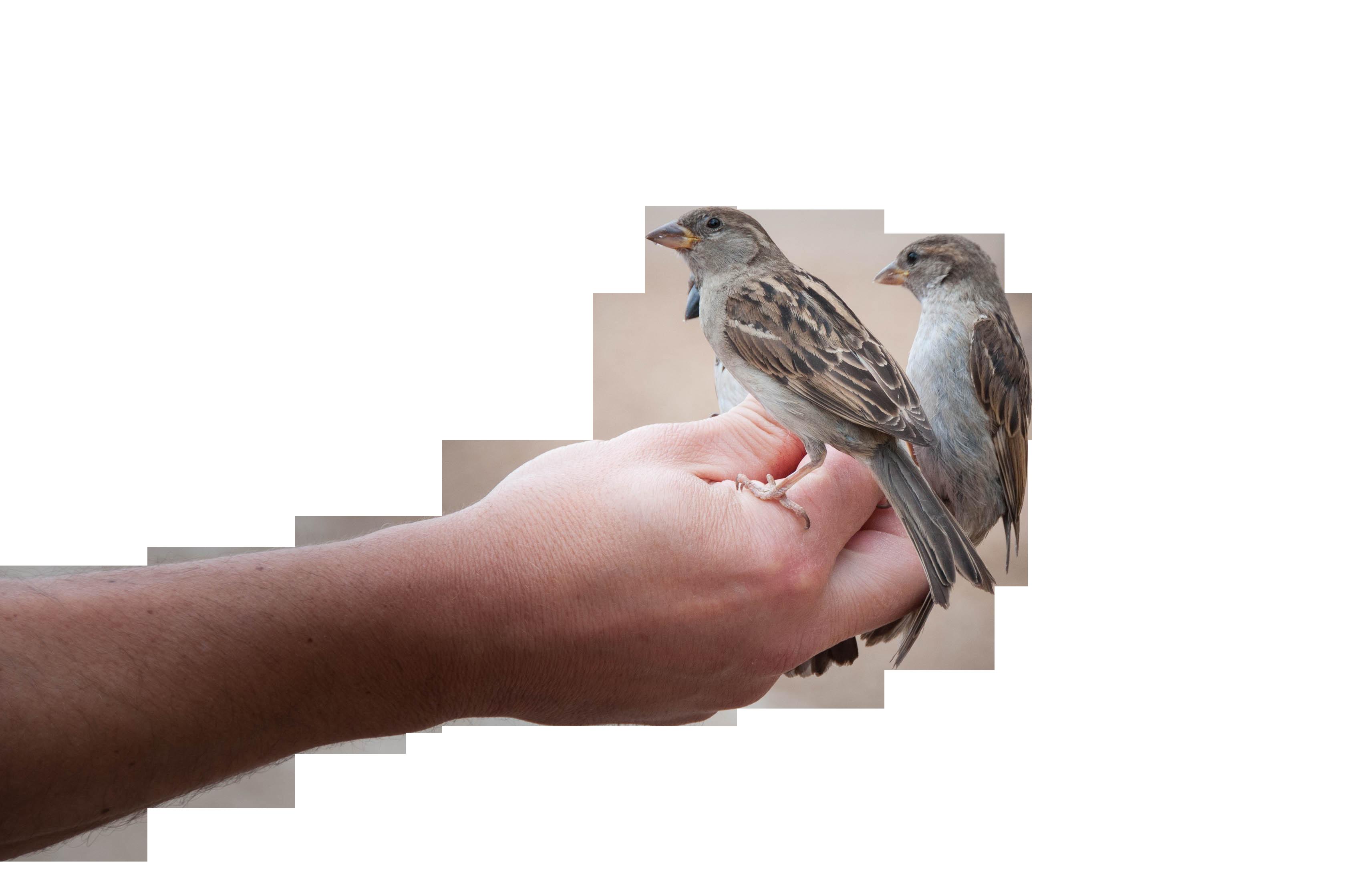 bird-818045_Clip