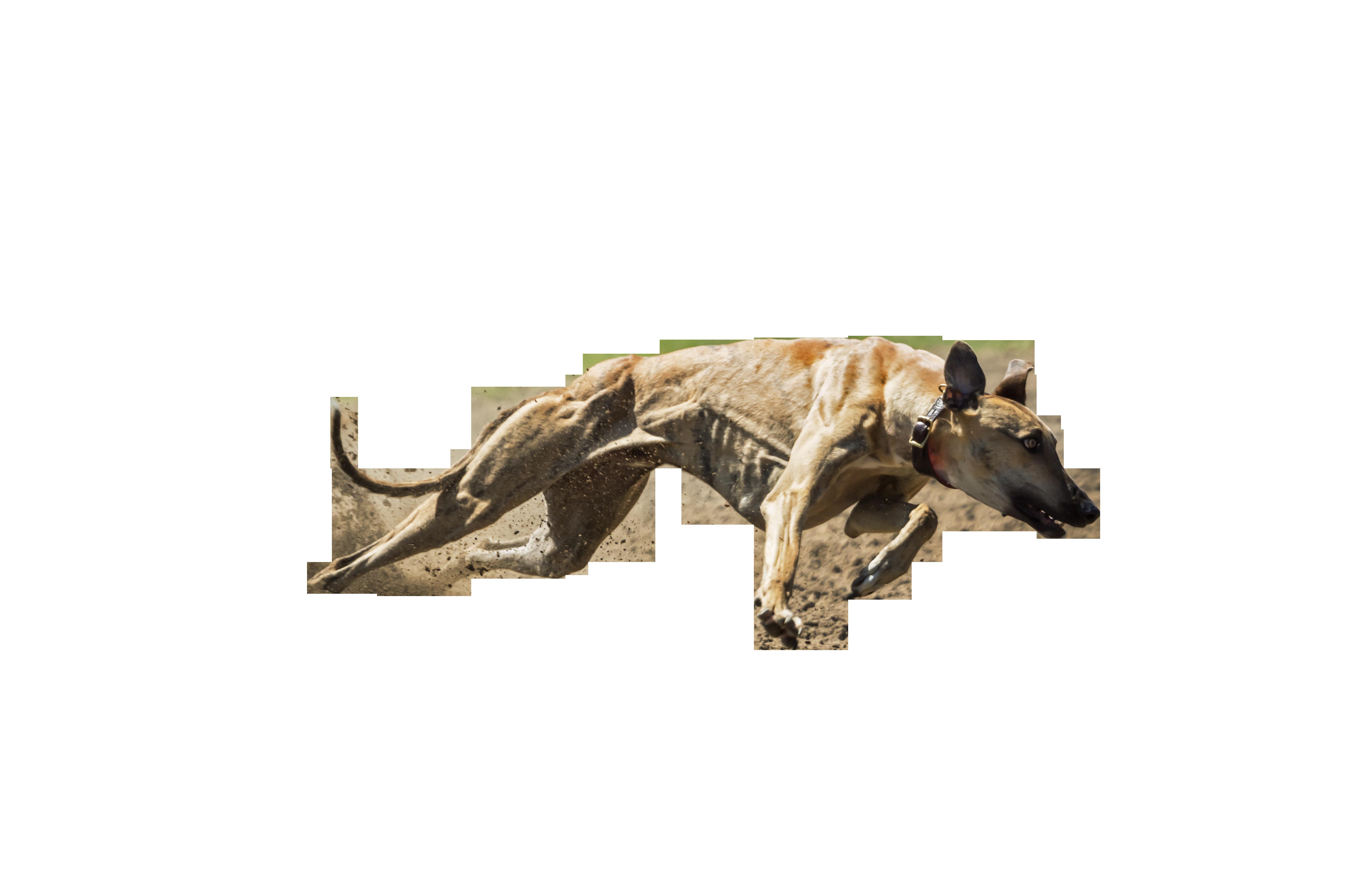 dog-859394_Clip