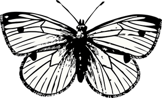 butterfly-32908__340.png