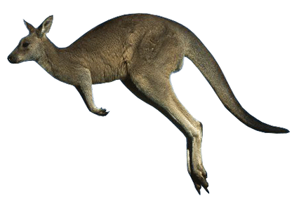 Kangaroo PNGs