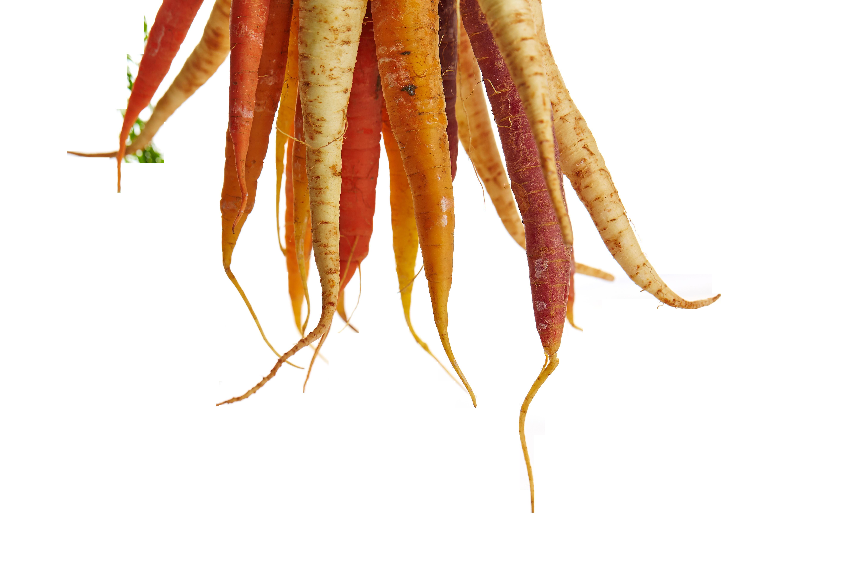 carrots-1149173_Clip