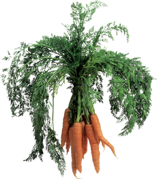 Carrot, free PNGs