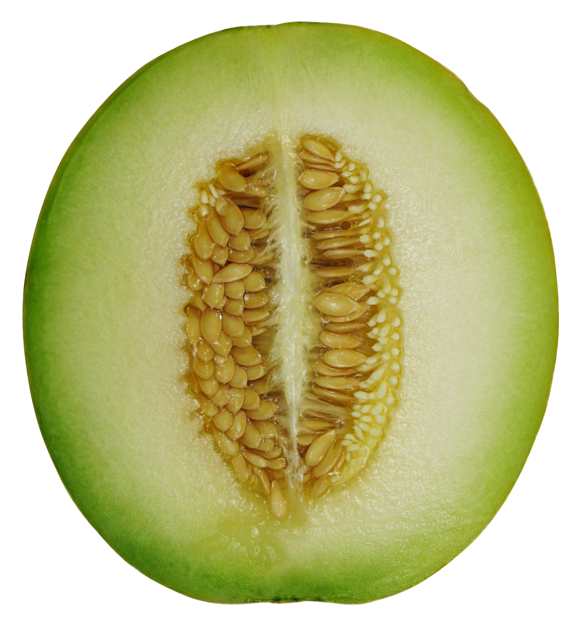 melon-cross-section-757635_Clip