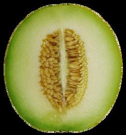 melon-cross-section-757635_Clip