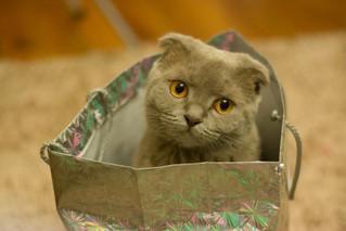 Cossyimages Kitten (82).jpeg