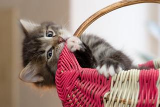 Cossyimages Kitten (13).jpg