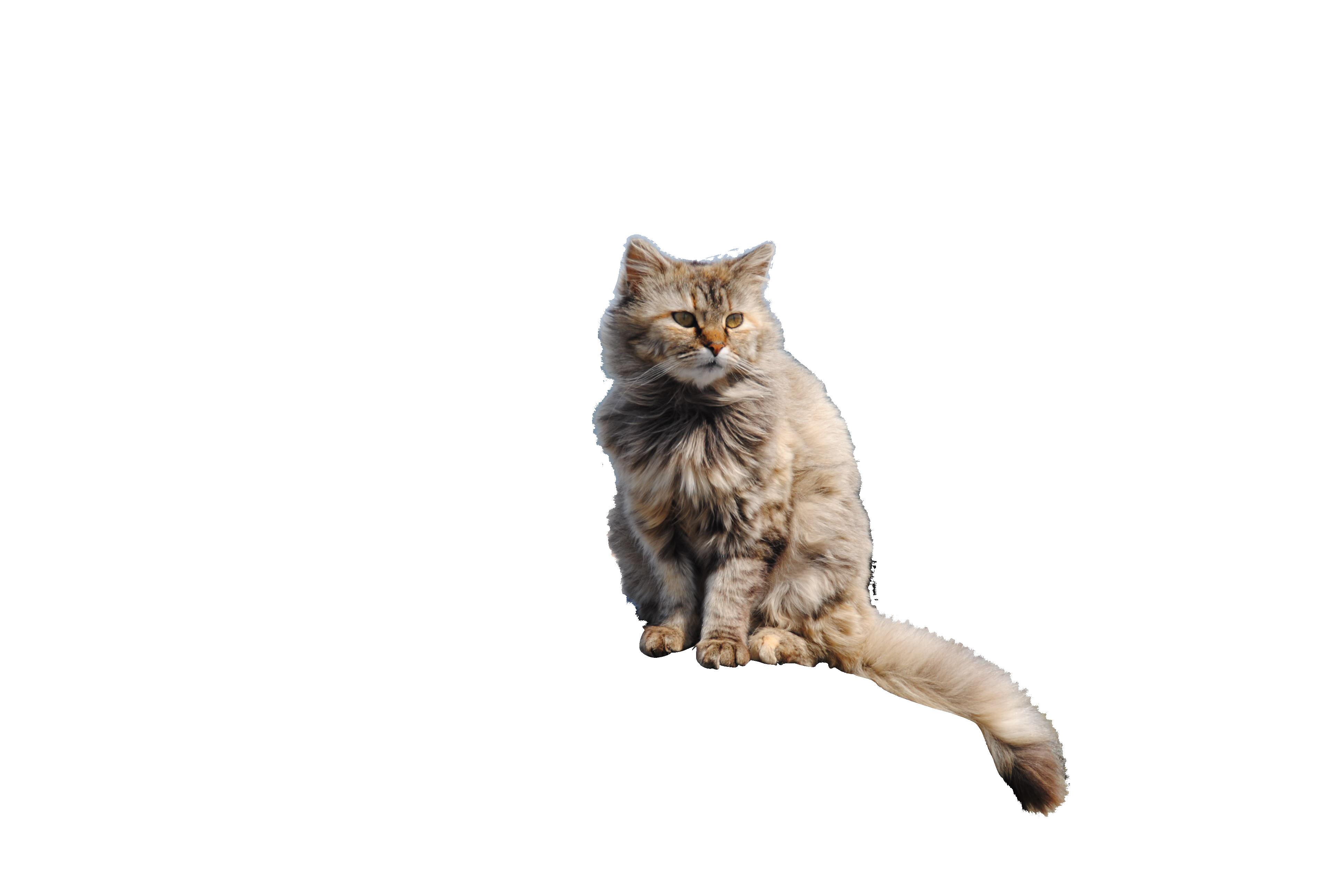 cat-1022411_Clip