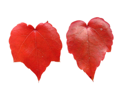 leaves-1012948_Clip