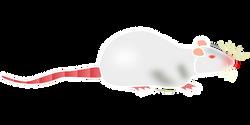 albino-151863__340