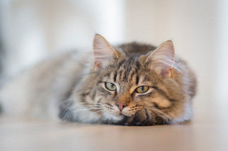 Cossyimages Kitten (57).jpeg