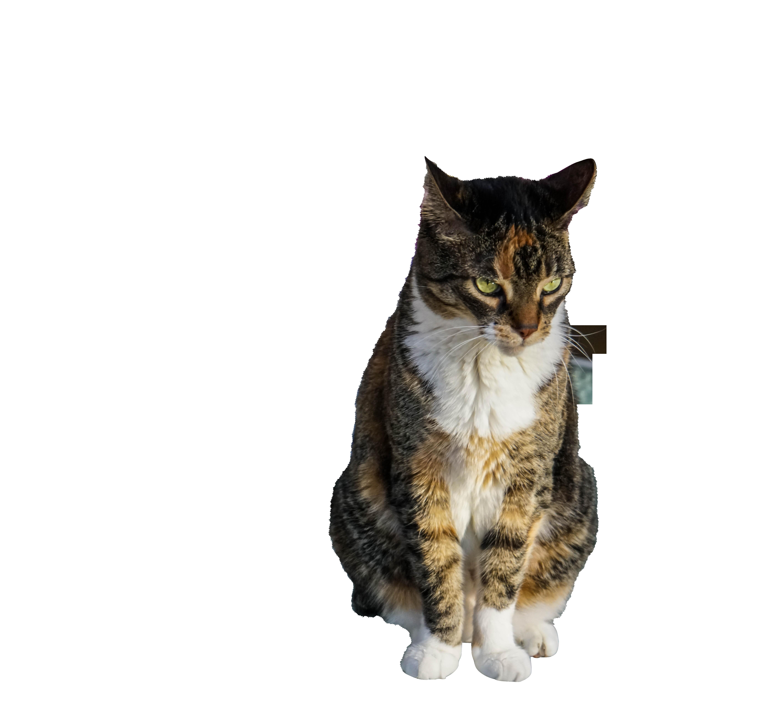 cat-1208803_Clip
