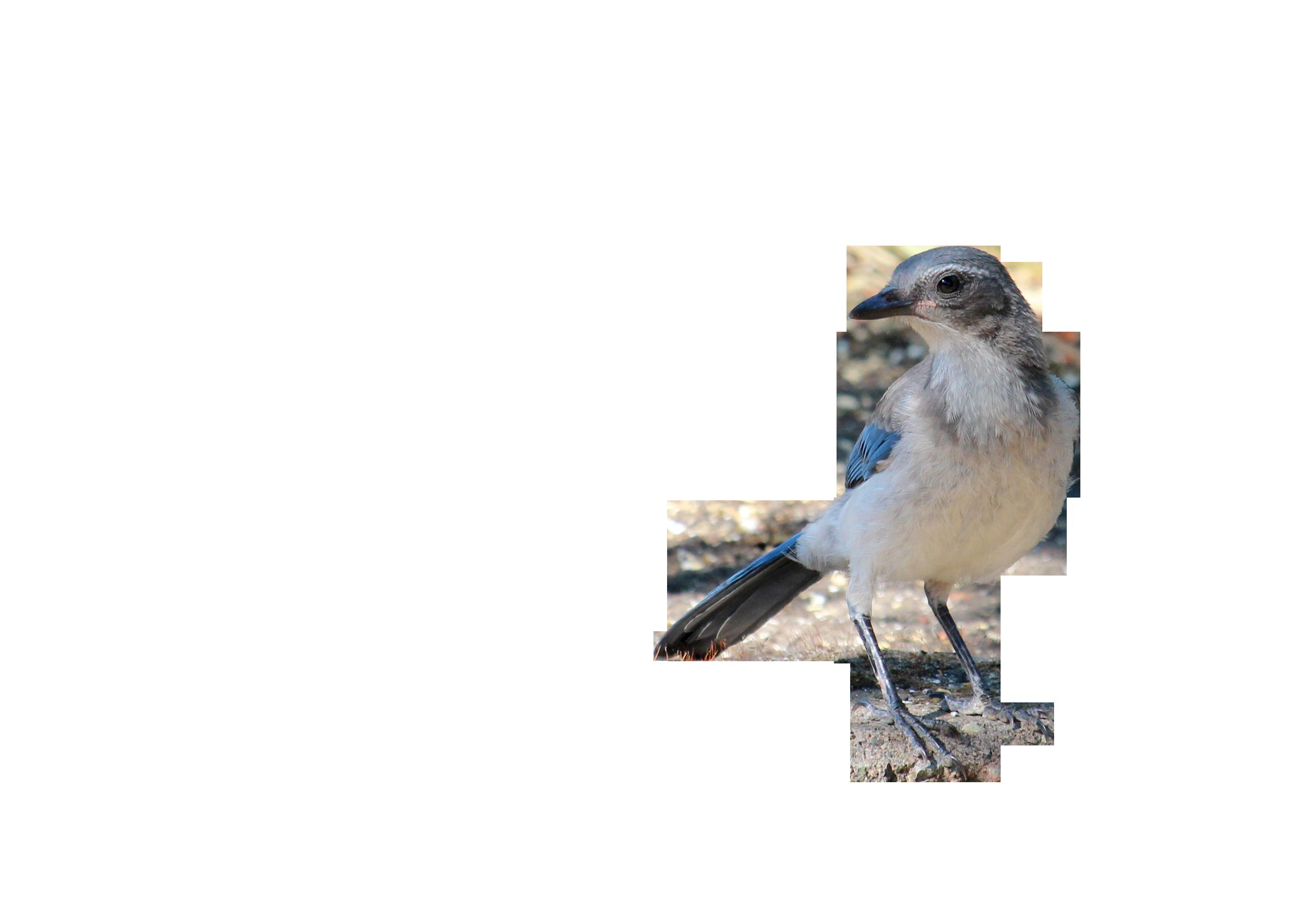 bird-853493_Clip