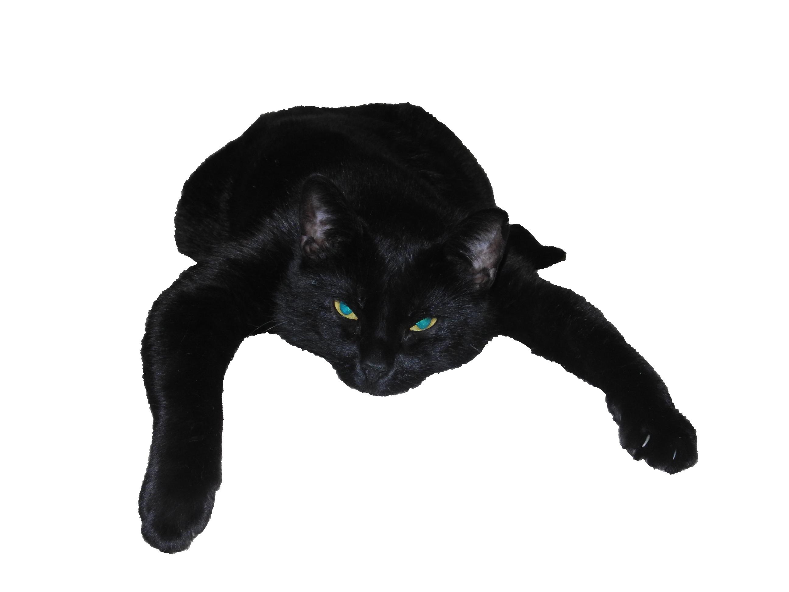 cat-440404_Clip