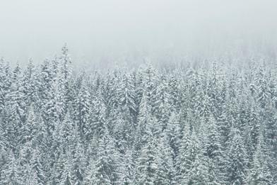 Cossyimages Winter (26).jpg