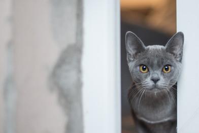Cossyimages Kitten (11).jpg